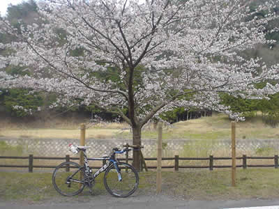 100403sakura.jpg